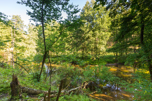 Beautiful landscape with summertime forest and river. Wadag river in Olsztyn