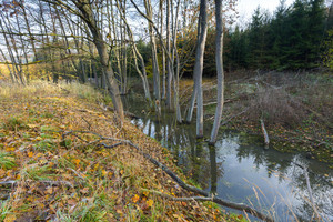 Landscape with trees gnawed by beavers. Place near beaver dam in autumnal forest