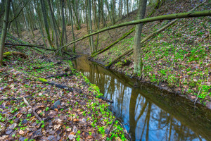 Forest wetlands. Small river in springtime forest. Beautiful green landscape