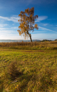 Beautiful autumnal landscape with grassland and trees. Tranquil autumnal day.