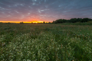Sunrise with cloudy sky over beautiful summer meadow. Nature landscape.