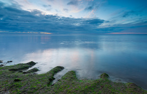 Baltic shore. Beautiful morning long exposure photo of shore shore overgrown with algae
