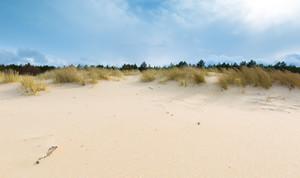 Beautiful sea shore with wild grass and shore plants. Baltic sea coast.