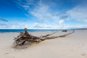Beautiful sandy sea shore with driftwood. Baltic sea. Long exposure photo.
