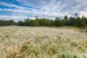 Autumnal morning landscape with hoarfrost on grass and plants. Beautiful Poland.