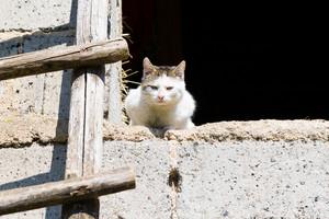 Cat outdoor portrait. Domestic cat photographed in outdoor light.