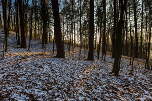 Landscape of late autumnal forest with first snow. Beautiful virgin forest with first snow in Poland.
