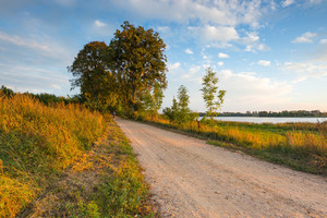 Beautiful alley of trees. Rural road with trees at sunny autumnal afternoon. Polish landscape