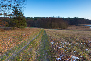 Landscape of fields at late autumn or winter with little snow and withered trees and grassland. Polish landscape