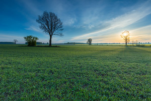 Morning over young cereal field. Beautiful calm countryside at springtime.