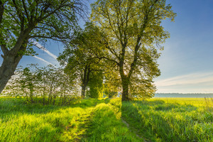Beautiful alley of trees on old forgotten road in countryside. Springtime landscape photographed in Poland