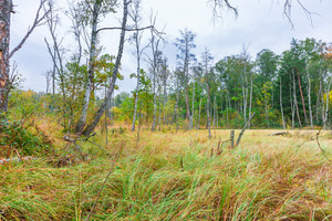 Autumnal landscape with swamps or wetlands. Colorful landscape with wetlands and dead trees.