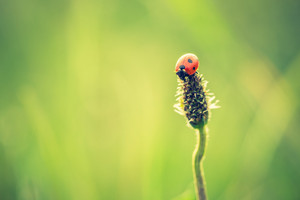 Beautiful vintage photo of ladybug sitting on plant. Nature background with vintage mood effect