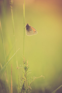 Vintage photo of beautiful butterfly sitting on plant. Close up of Butterfly in nature
