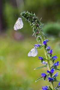 Beautiful wild colorful  butterfly resting on plant. Insect macro.