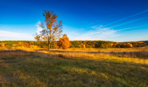 Beautiful autumnal landscape with grassland