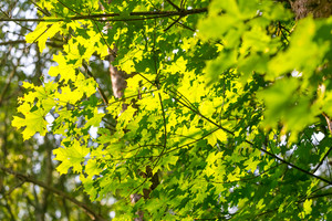 Abstract background of green tree branches in summertime forest. Nature background