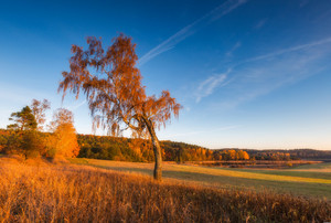 Beautiful autumnal landscape with trees and beautiful countryside photographed at sunset. Amazing dreamy landscape with good light.