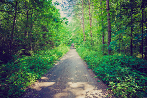Green summer european forest. Beautiful landscape of polish forest photographed in forest.