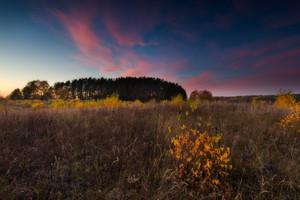 나무와 아름다운 시골과 아름다운 단풍 풍경 일몰 촬영. 좋은 빛으로 놀라운 꿈꾸는 풍경입니다.