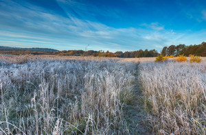 Autumnal cold morning on meadow with hoarfrost on plants and beautiful colors. Polish landscape photographed in late october.--
