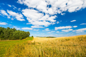 Stubble field under blue sky with white clouds. Summertime landscape. Polish countryside.