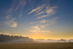 Oat field landscape at foggy sunrise