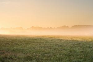 Foggy sunrise over beautiful polish meadow