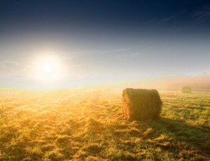 Bales of hay at sunrise. Beautiful foggy morning
