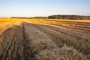 Beautiful late summer stubble field at sunrise. Morning landscape