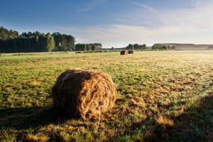 Bales of hay at sunrise. Beautiful foggy morning