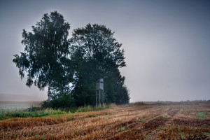 Rural field in autumn time. Big fog and sad atmosphere landscape