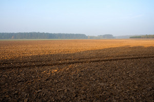 Plowed field with tractor traces and distant forest at sunrise