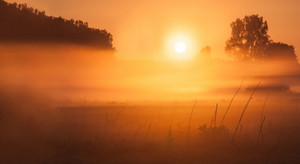 Foggy sunrise over beautiful polish meadow