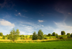 Beautiful meadow in late sprintime under blue sky with clouds