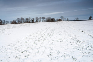 Winter field landscape with field covered by snow in Poland