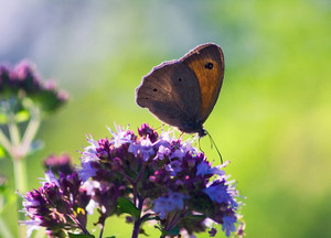 Beautiful butterfly photographed in good light in nature sitting on flower