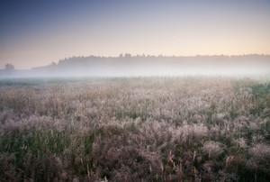 Foggy morning on meadow. rural summertime landscape