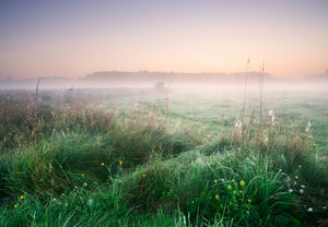 Foggy morning on meadow. rural summertime landscape