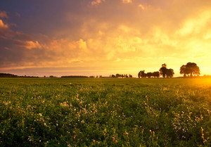 Beautiful sunset with dramatic sky on field or meadow
