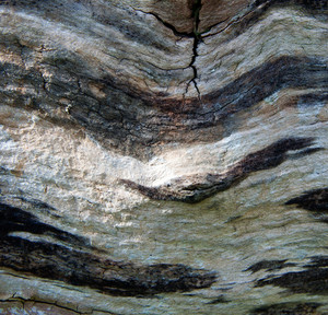 Structure of close up very old tree trunk.