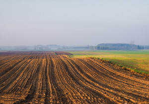 Plowed field in golden light. Polish rural landscape
