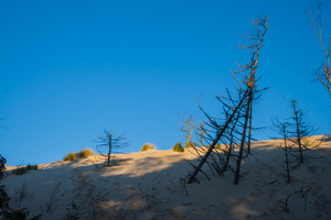 Dead trees and straw growing on sands. Photographed in Slowinski National Park