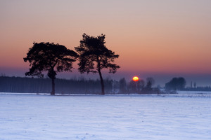 Beautiful winter field covered by snow and distant trees in tranquil landscape