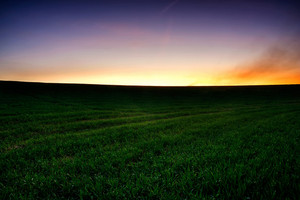 Young cereal field landscape
