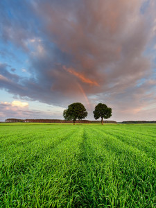 Beautiful landscape with young green field photographed during late spring