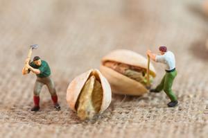 Miniature Loggers Cut Up Pistachios