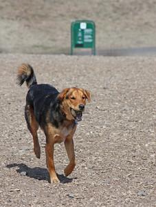 Mixed Breed Happy Dog