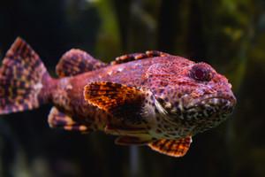 Modern Fish