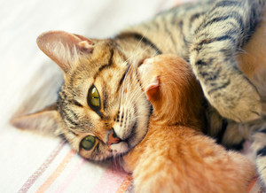 Mom cat hugging her newborn kitten
